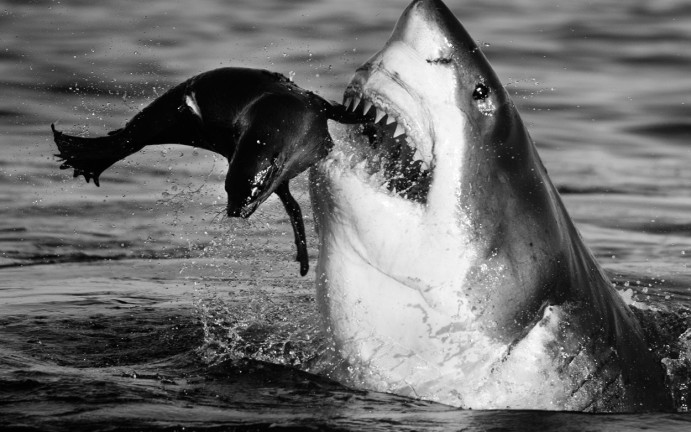 Jaws | David Yarrow