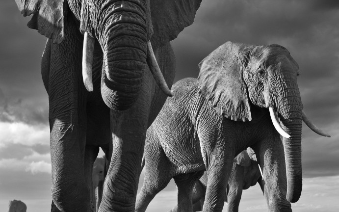 David Yarrow | Big