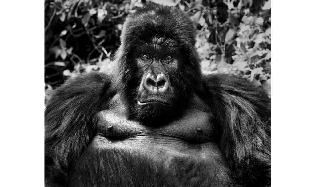 King Kong | David Yarrow