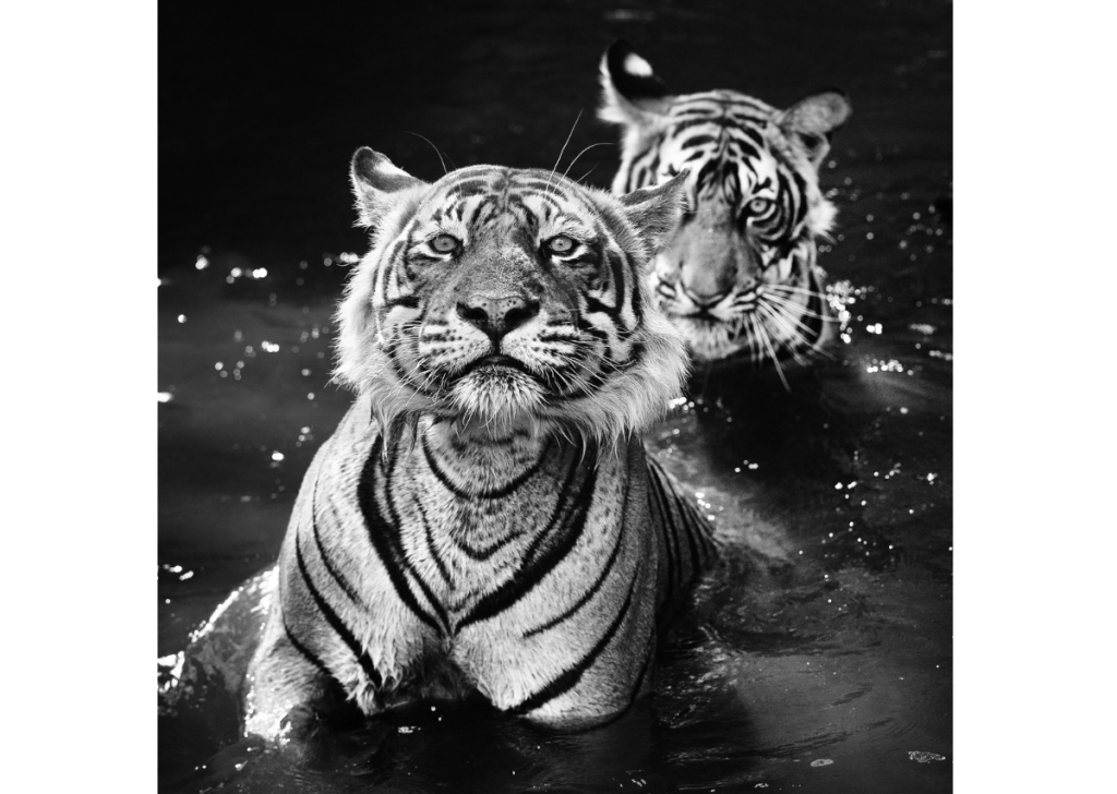 The Jungle Book Stories | David Yarrow