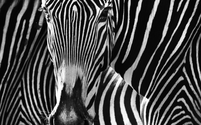The Puzzle | David Yarrow