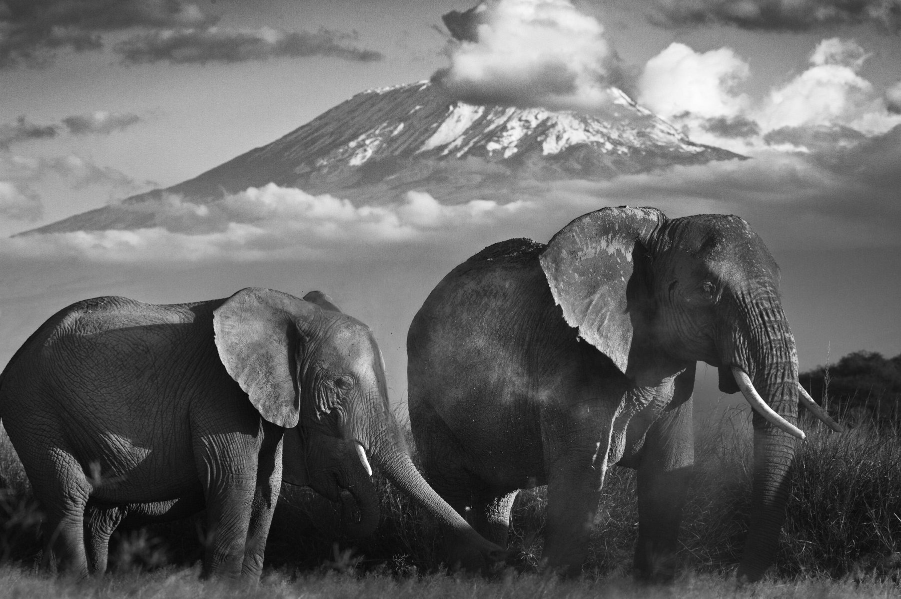Kilimanjaro – Amboseli