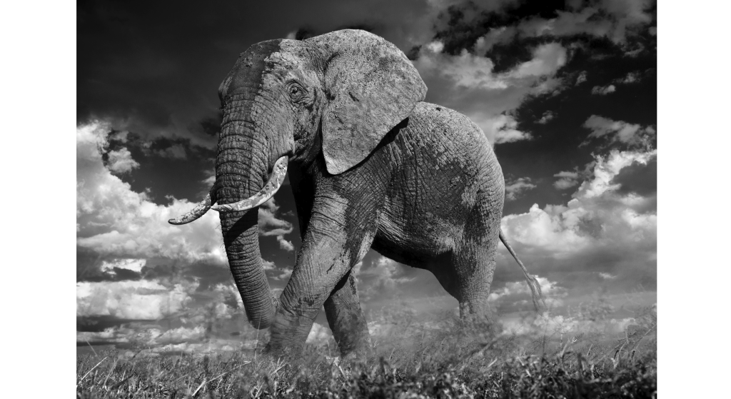 THE PATRICIAN | DAVID YARROW