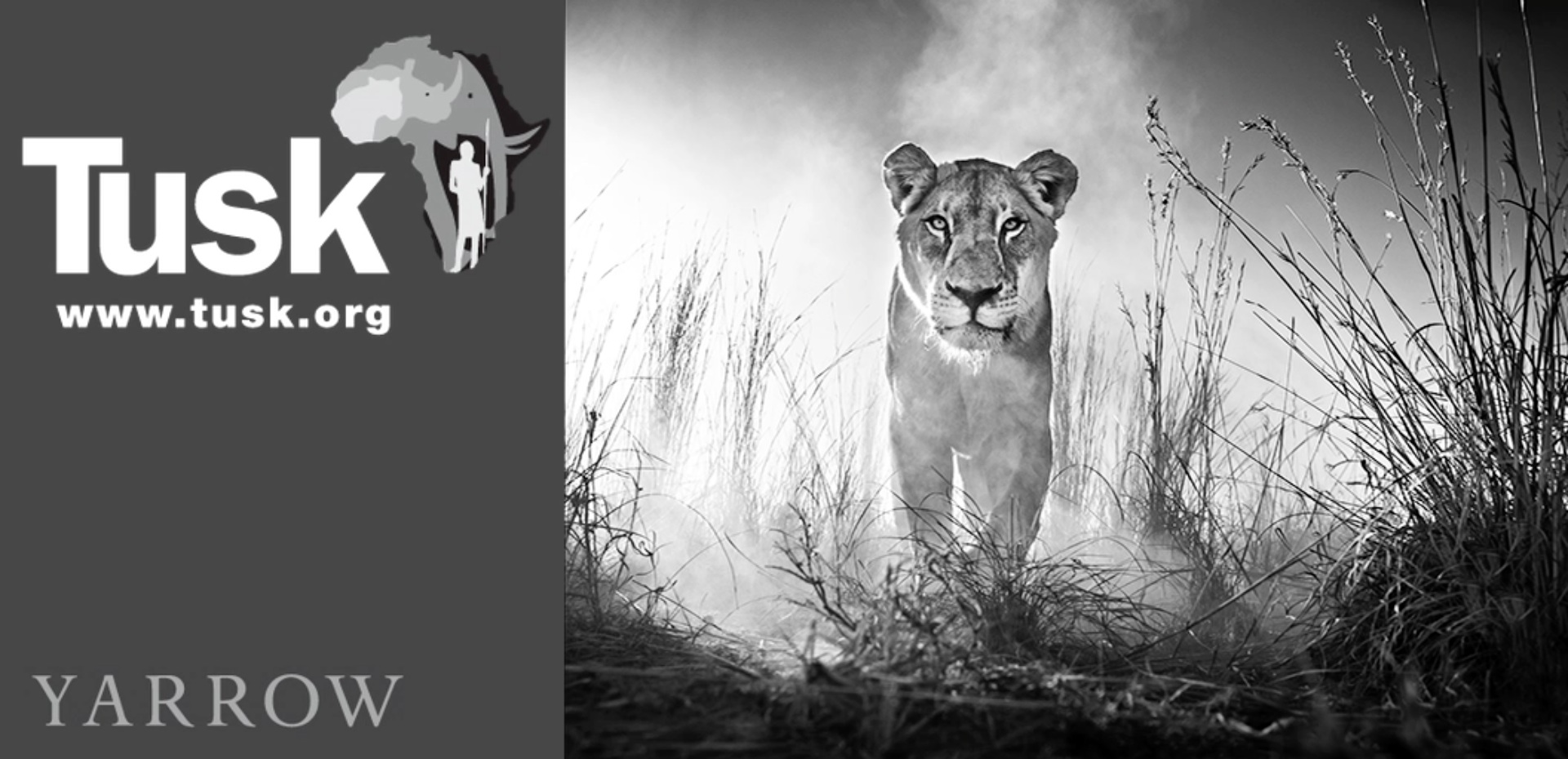 David Yarrow Tusk