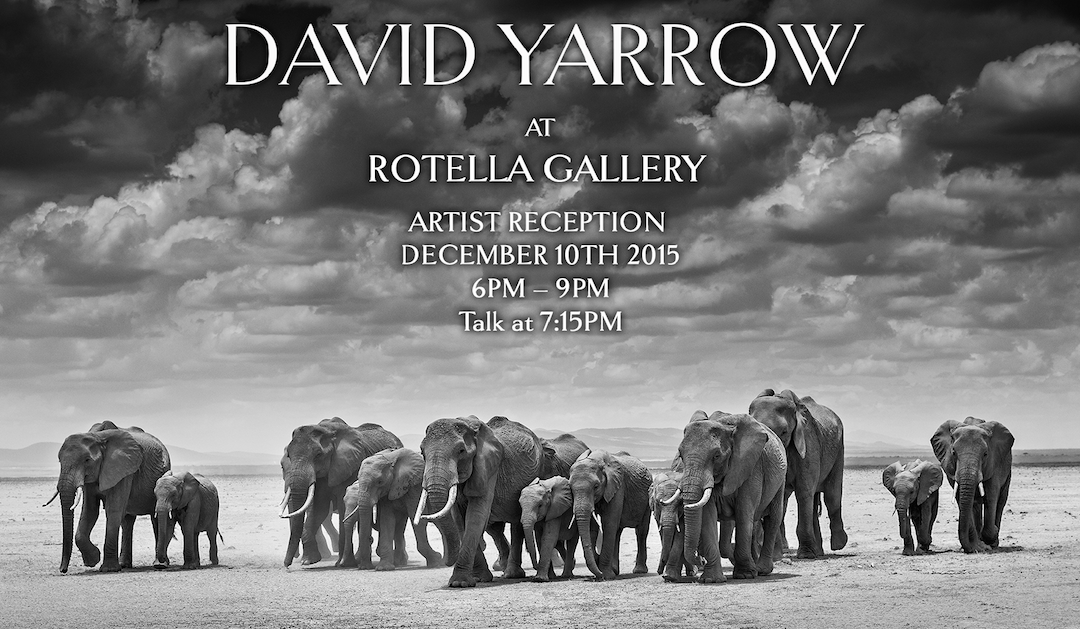 David Yarrow at Rotella Gallery NY