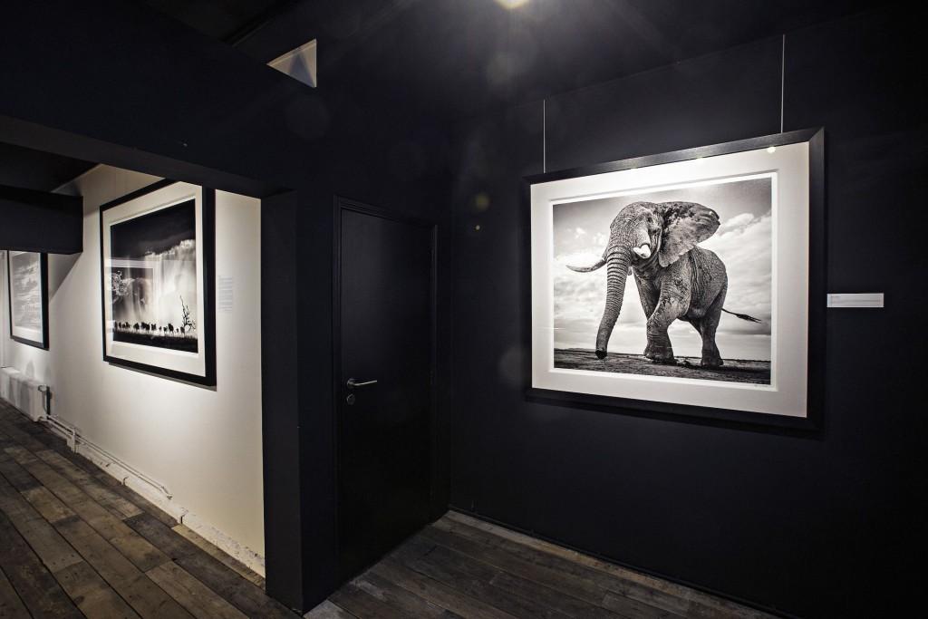 David Yarrow at Kunsthuis 3