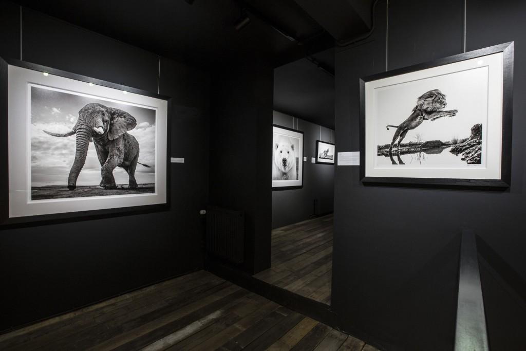 David Yarrow at Kunsthuis 4