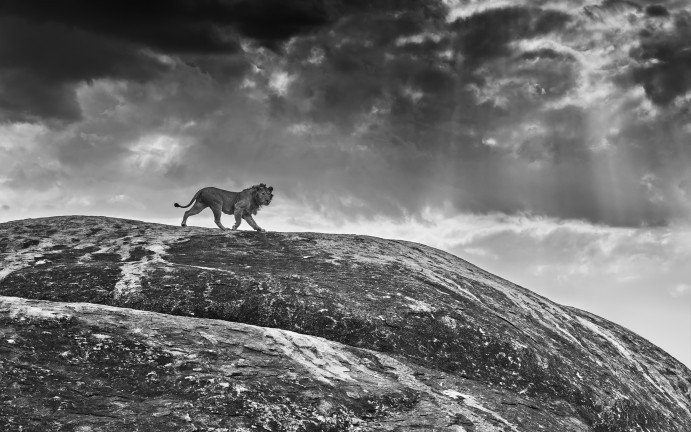 Rock Star - David Yarrow