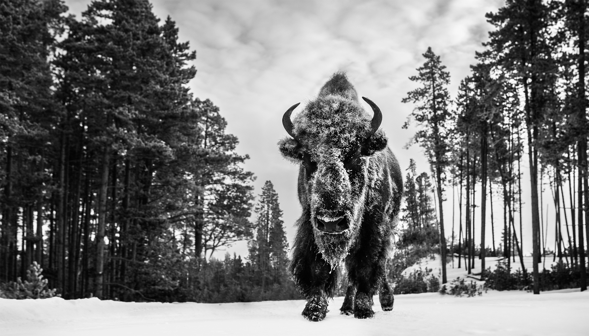 Forest Grump David Yarrow Photography