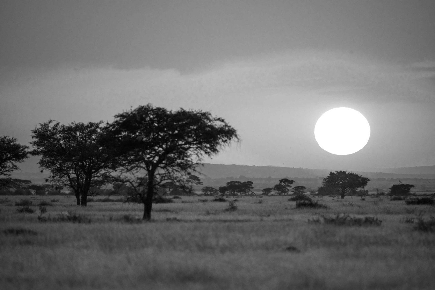 Letter From Singita, Tanzania