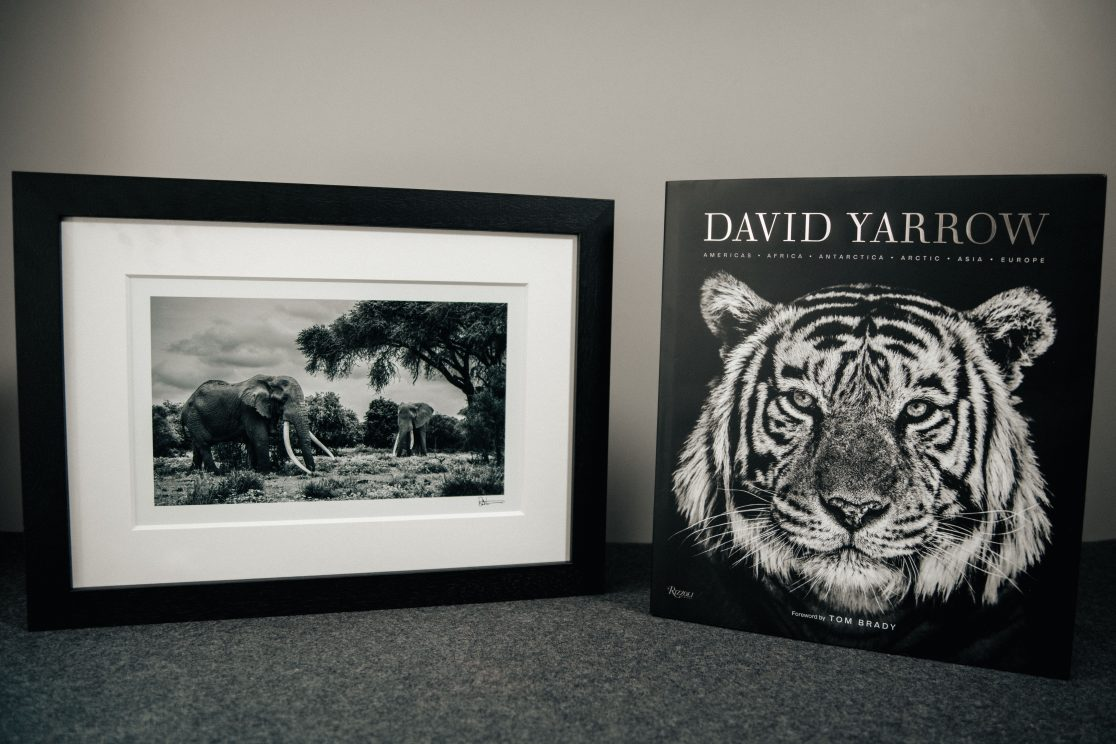 David Yarrow Stills21