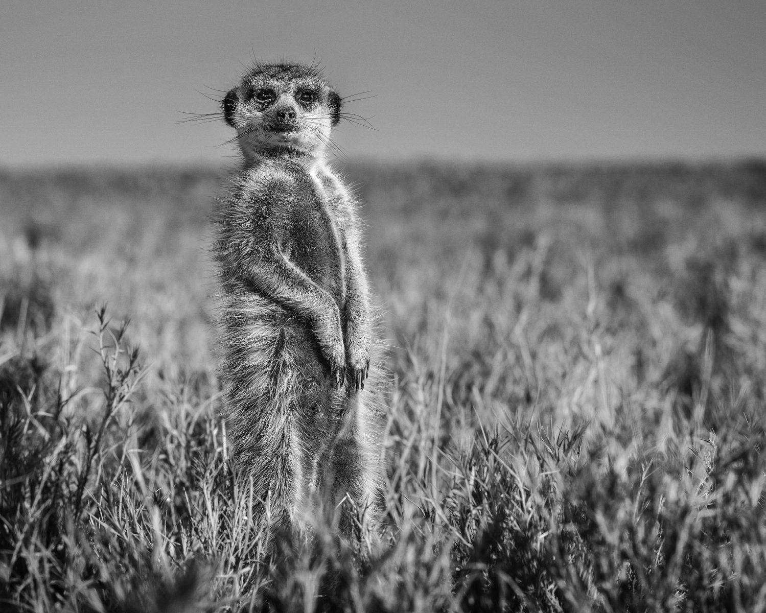 Letter From Maun, Botswana