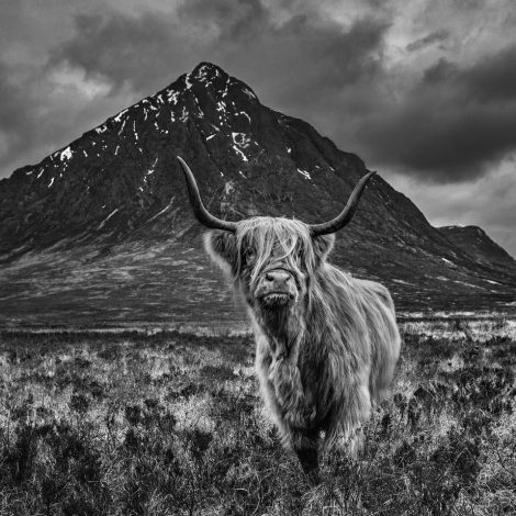 Glencoe   Combining a cow and a hill is not the most promising of premises for an artwork—the concept would miss many an editor's cut. But I sensed that this was a very special moment in time.   It shows the Highlands of Scotland as we know them—imbued with atmosphere, dominated by grandeur, and enveloped in mystery. The image brings to mind whiskey, bonhomie, and a barbarous past. The history of the Highlands is dark and unruly, and I think there is a nod to that here. Buachaille Etive Mor is a spectacular peak. It guards the eastern entrance to Glencoe like a centurion in ancient Rome. Its much-photographed and emblematic rock face is best complemented not by blue skies, but by the weather that defines western Scotland—dark and low clouds that put a menacing ceiling on the wilderness that lies below.   I could have gone to Glencoe at any time, but I chose the last days of spring, as I wanted the hint of cold and the additional tonal breadth that the remaining snow pockets give to the scene. There is such simplicity to the image, and yet it can grab and hold attention for much longer than the premise suggests.   Photography without emotion is nothing, and when I look at this image, it evokes childhood memories on a grand scale. There is a timeless, almost prehistoric, element to the content, and while we will never know, there is a sense that this pairing could have also happened thousands of years ago. As a country our glorious days of engineering and invention may be behind us, but the one constant is the unique rawness and geological drama of places such as Glencoe.
