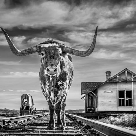 """The End of the Line  Longhorn cattle are not only emblematic of Texas, they are also surely some of the most visually spectacular cows in the world. On location on the abandoned film set of """"There Will Be Blood"""", we tried different combinations with a few prize-winning cows.  This composition was a test of the crew's patience and all my thanks go to Ryon Marshall and his fellow cowboys, who worked with great skill. Working Texas cowboys are the real deal - they work their cattle everyday.  From an art perspective I sensed that the bull should be facing me and there were no tension points with his horns.  Rail roads were so integral to the great push West as indeed were wagons and it struck me that they could complement each other outside a station. There is no real need for people to be in the image - there is enough there and the composition works. Rail tracks are great props for artists - they offer a whiff of romanticism and they also lead the eye."""