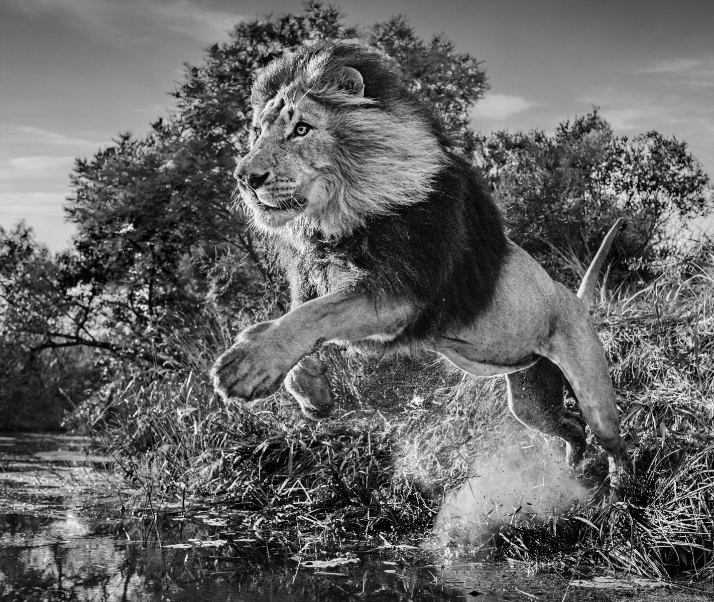 Tusk Lion Trail 2021